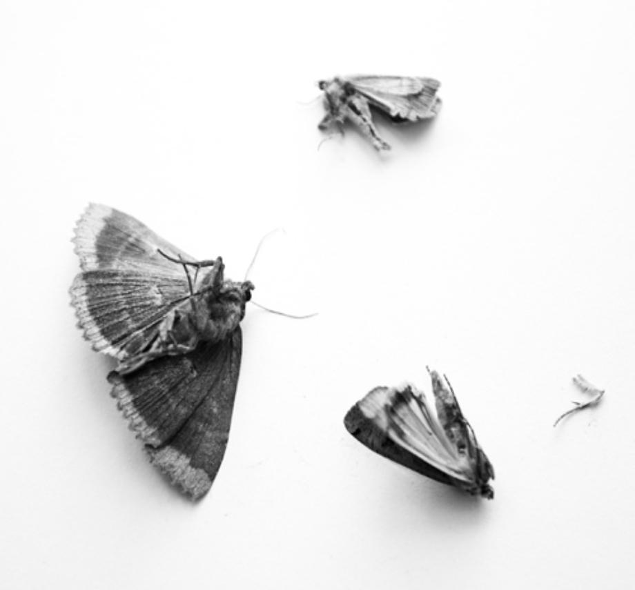 jornadas-coercion-y-violencia_miah